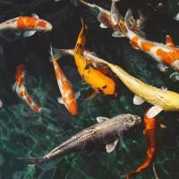 Stor webshop har alt, hvad du skal bruge af fiskepleje til dine fisk